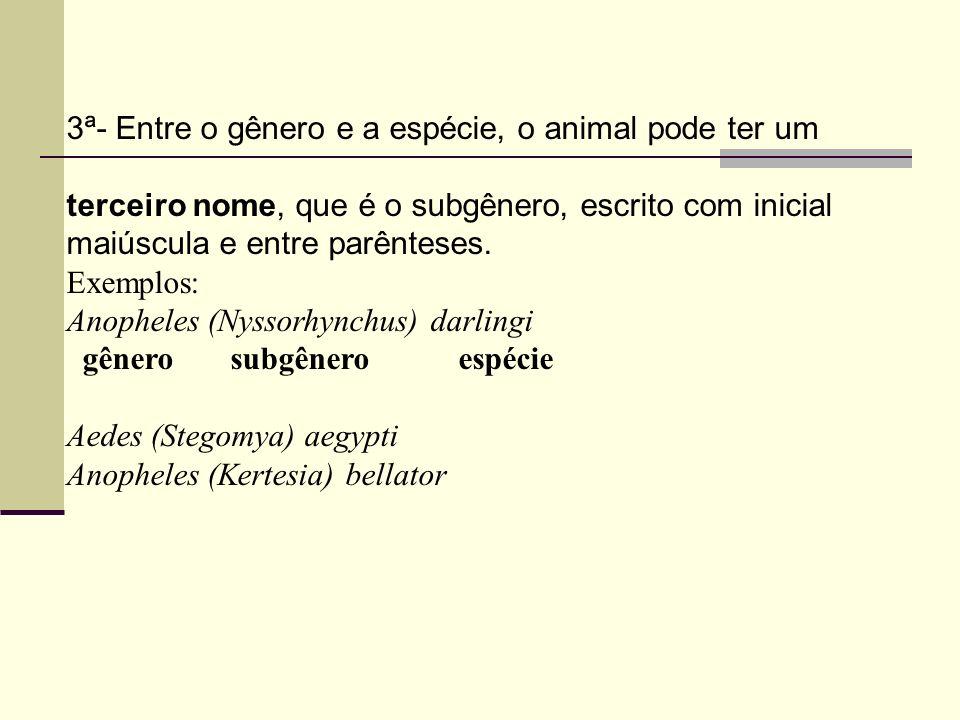 3ª- Entre o gênero e a espécie, o animal pode ter um