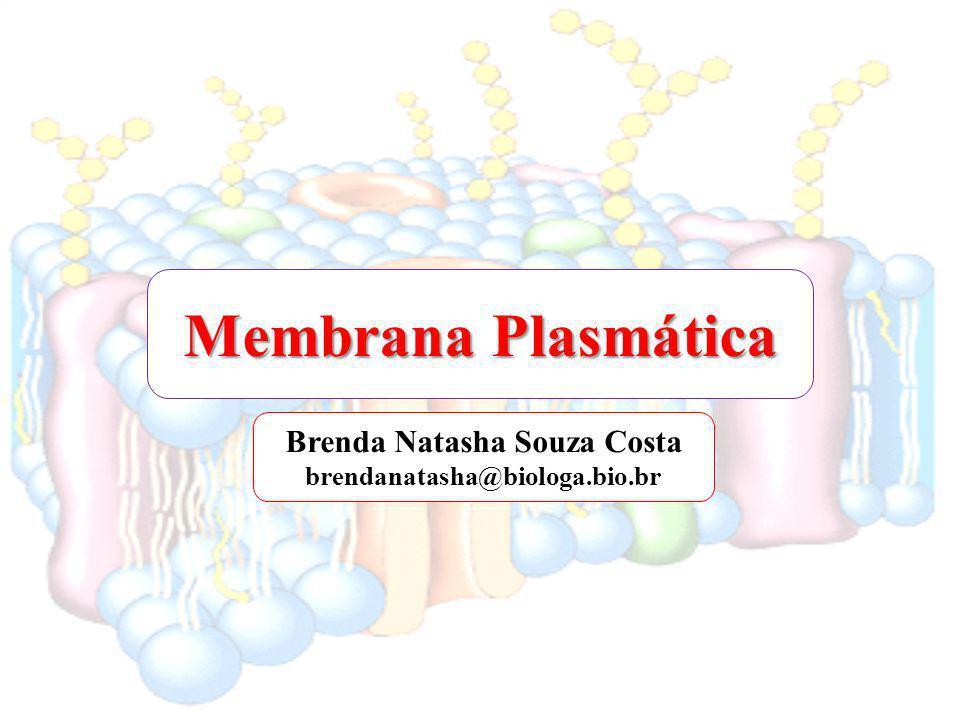 Brenda Natasha Souza Costa