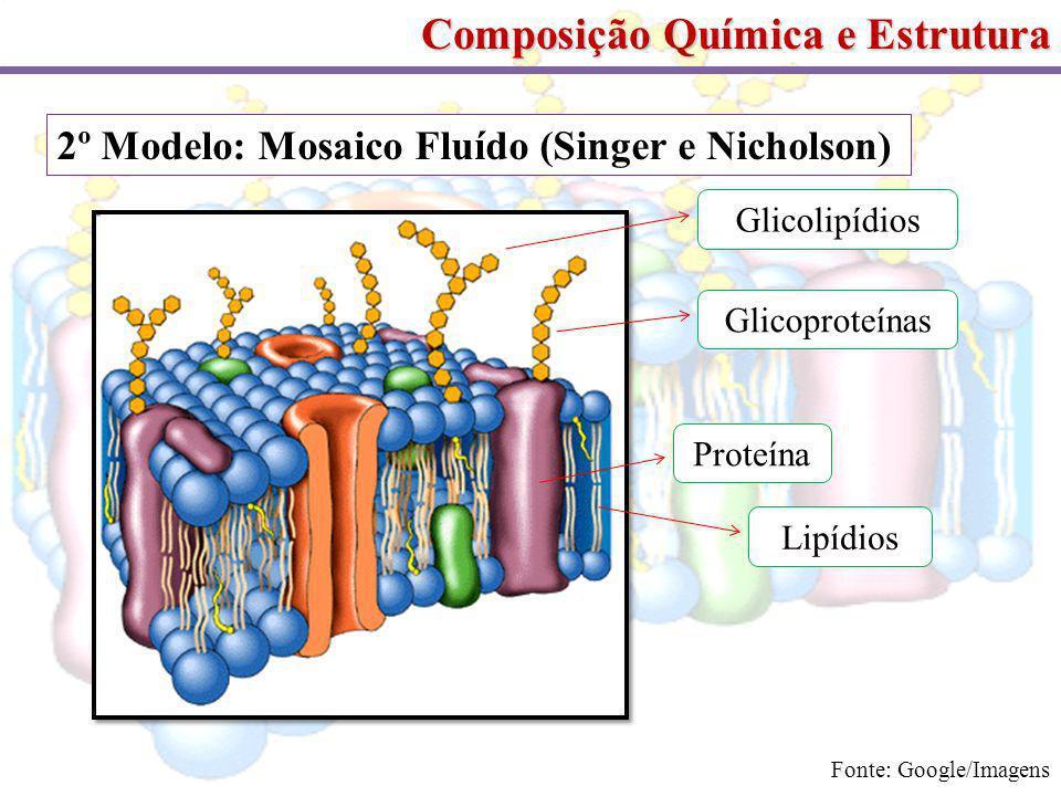 Composição Química e Estrutura