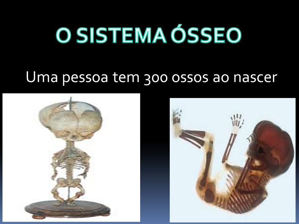 O SISTEMA ÓSSEO Uma pessoa tem 300 ossos ao nascer