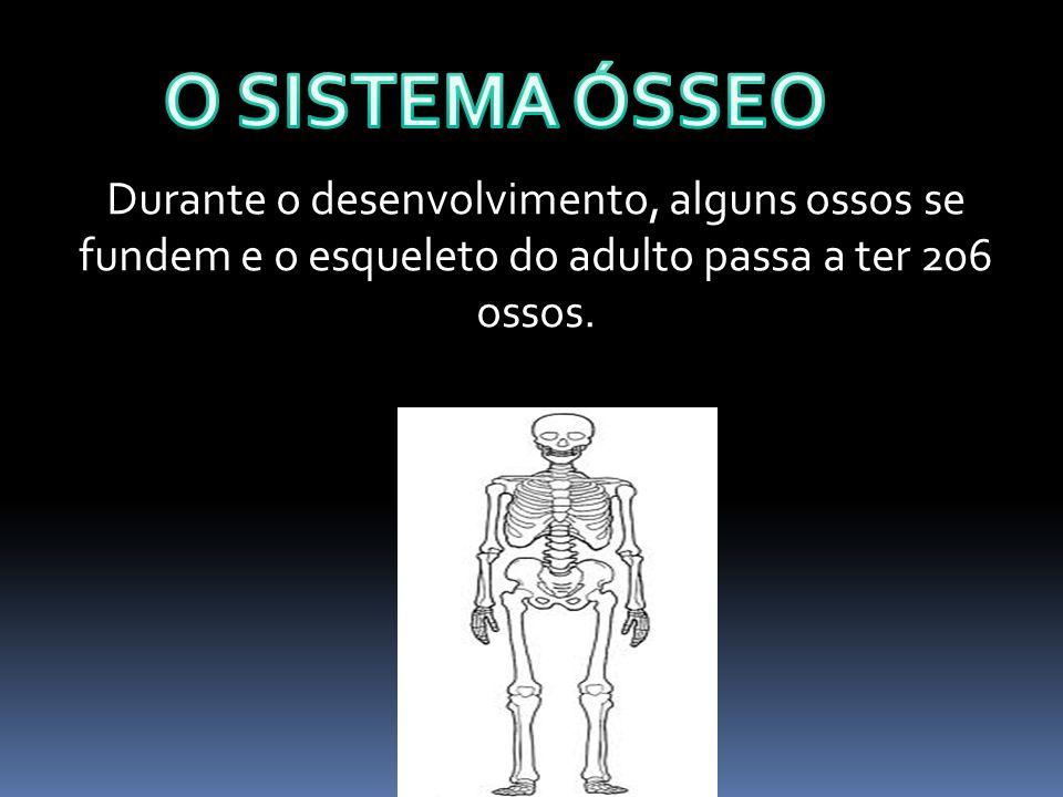 O SISTEMA ÓSSEO Durante o desenvolvimento, alguns ossos se fundem e o esqueleto do adulto passa a ter 206 ossos.