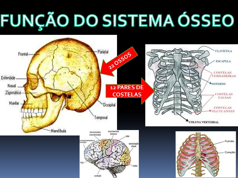 FUNÇÃO DO SISTEMA ÓSSEO