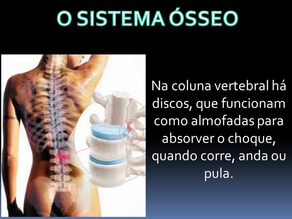 O SISTEMA ÓSSEO Na coluna vertebral há discos, que funcionam como almofadas para absorver o choque, quando corre, anda ou pula.