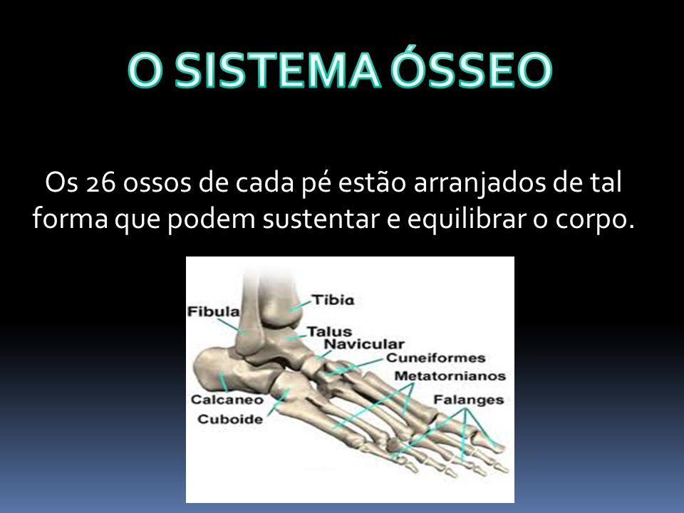 O SISTEMA ÓSSEO Os 26 ossos de cada pé estão arranjados de tal forma que podem sustentar e equilibrar o corpo.