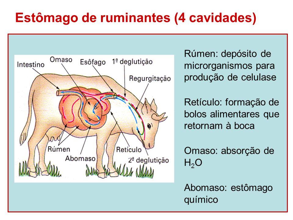 Estômago de ruminantes (4 cavidades)