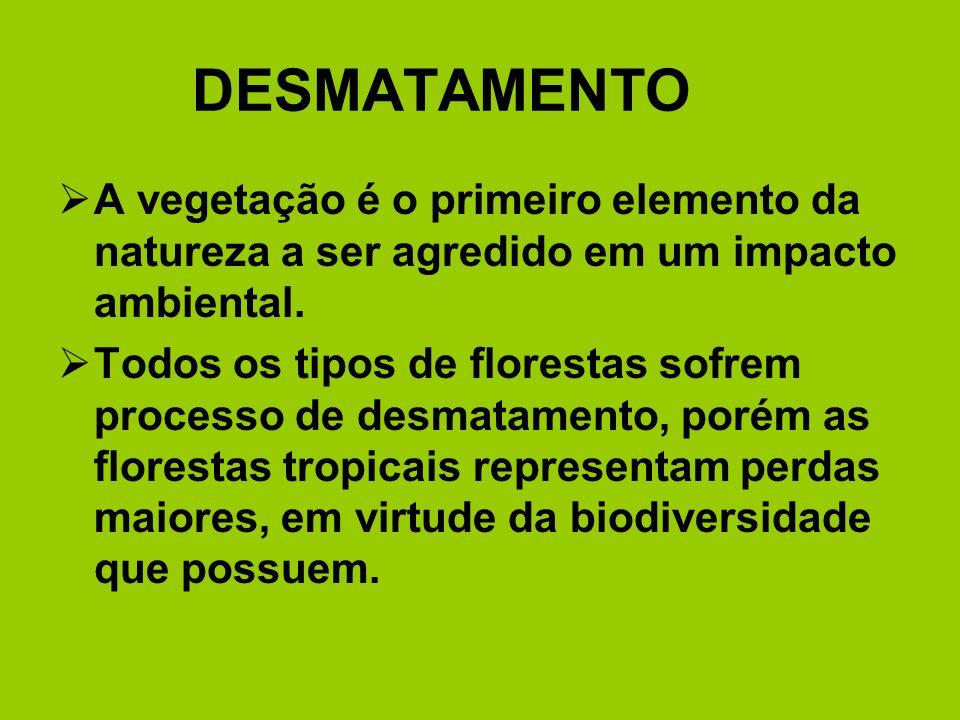 DESMATAMENTO A vegetação é o primeiro elemento da natureza a ser agredido em um impacto ambiental.