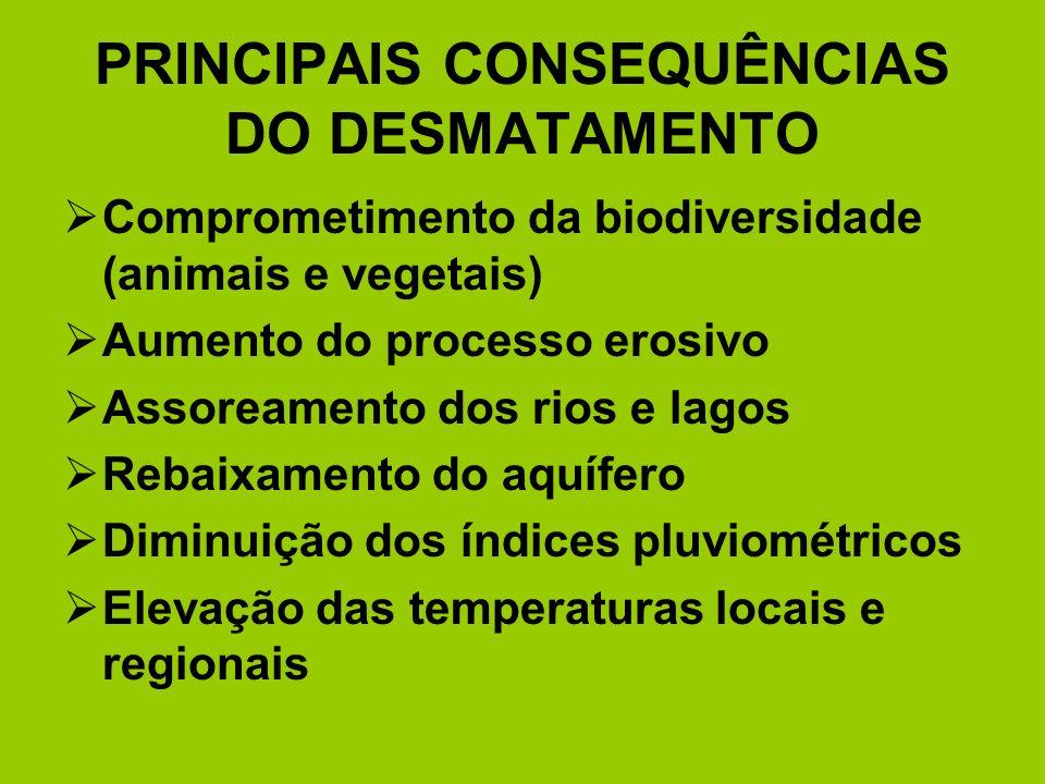 PRINCIPAIS CONSEQUÊNCIAS DO DESMATAMENTO