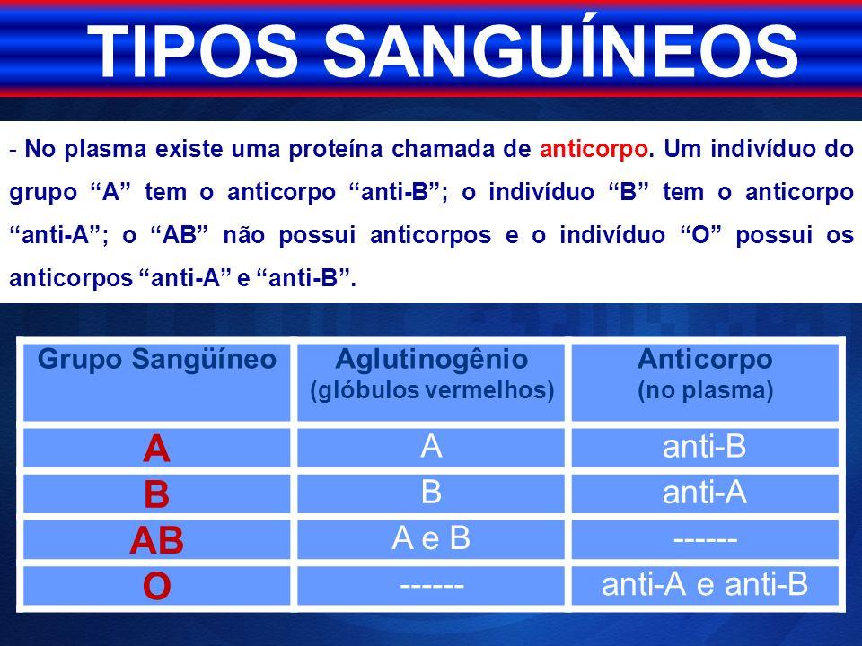 TIPOS SANGUÍNEOS A B AB O anti-B anti-A A e B ------ anti-A e anti-B