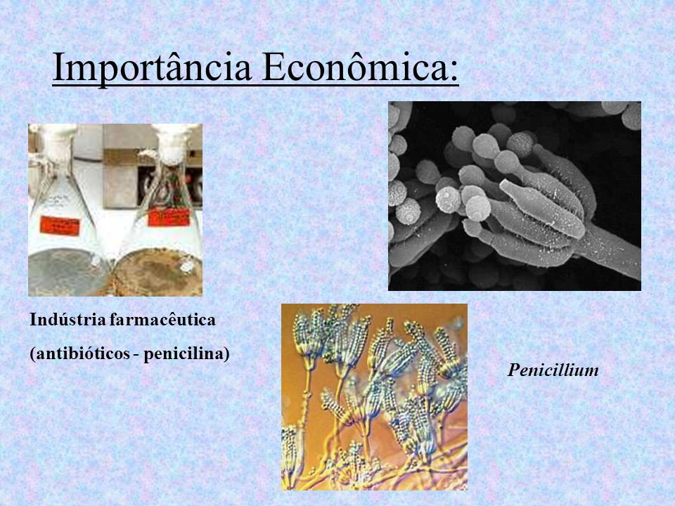 Importância Econômica: