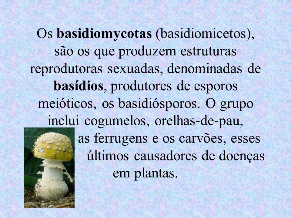 Os basidiomycotas (basidiomicetos), são os que produzem estruturas reprodutoras sexuadas, denominadas de basídios, produtores de esporos meióticos, os basidiósporos.