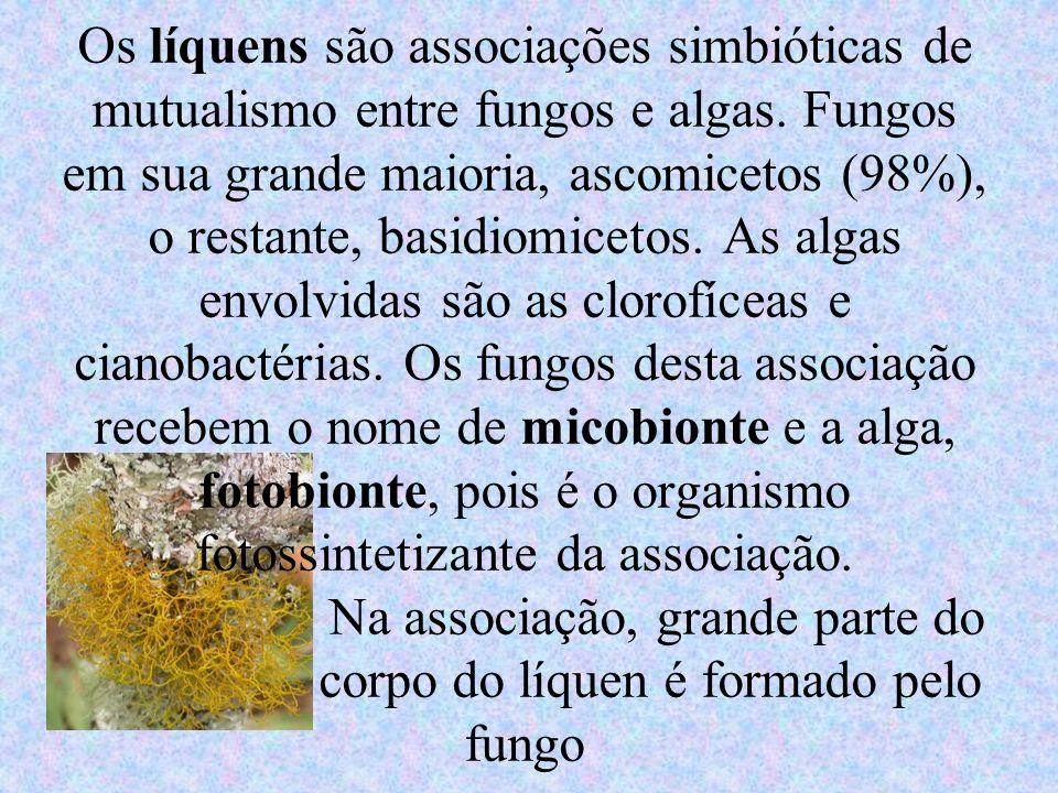 Os líquens são associações simbióticas de mutualismo entre fungos e algas.