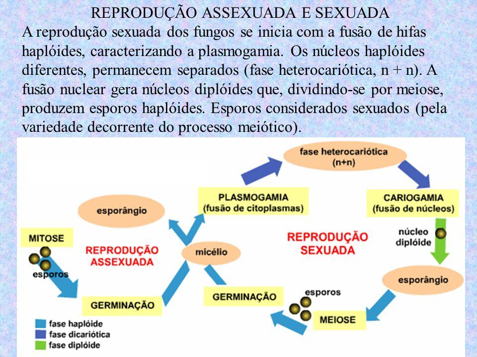 REPRODUÇÃO ASSEXUADA E SEXUADA