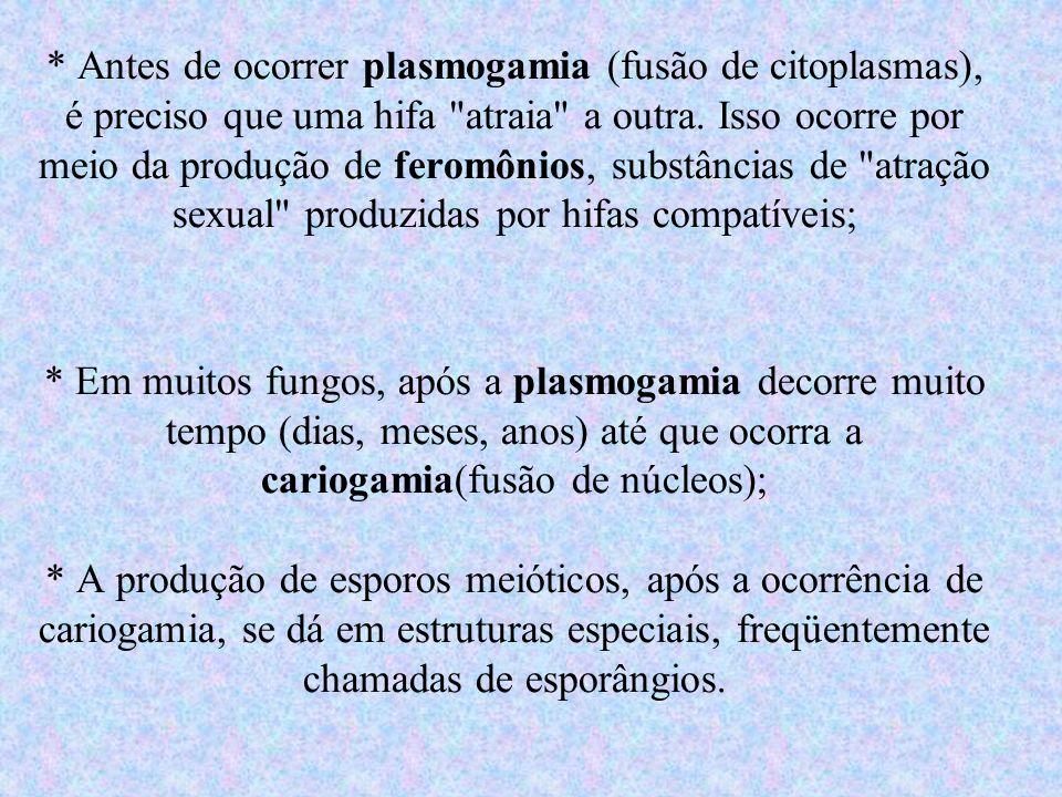 * Antes de ocorrer plasmogamia (fusão de citoplasmas), é preciso que uma hifa atraia a outra.
