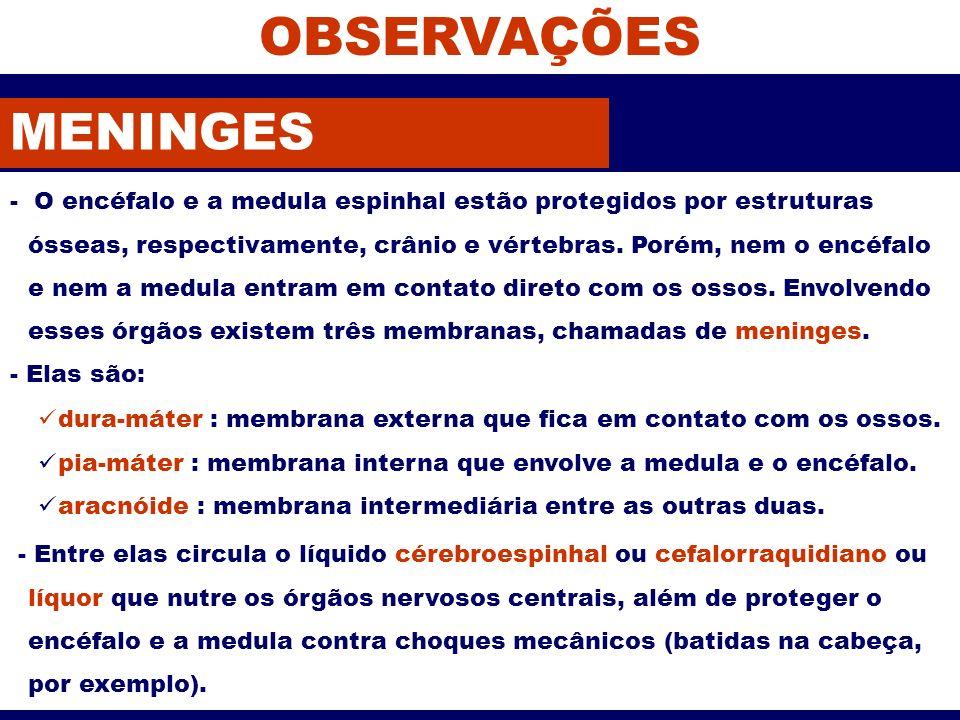 OBSERVAÇÕES MENINGES.
