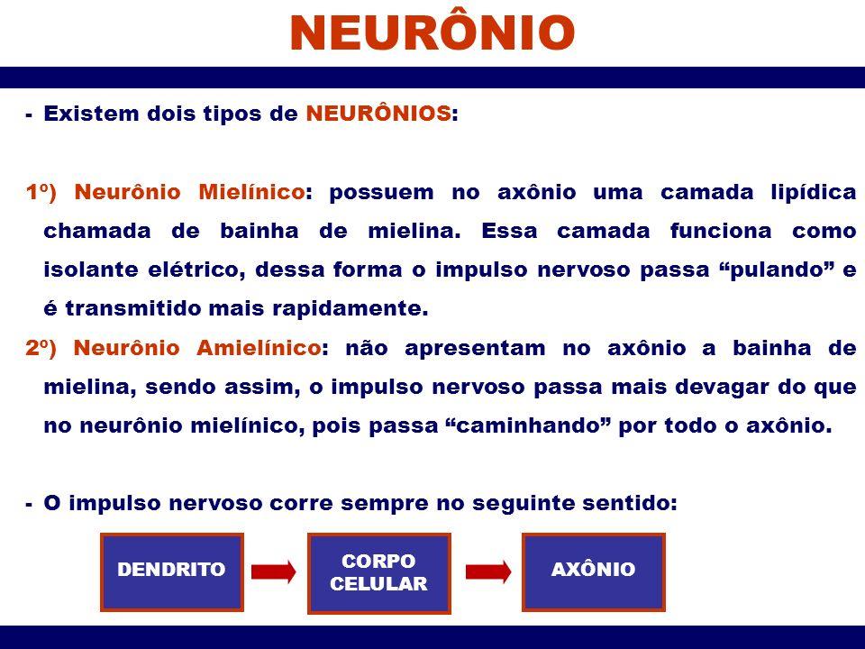 NEURÔNIO Existem dois tipos de NEURÔNIOS: