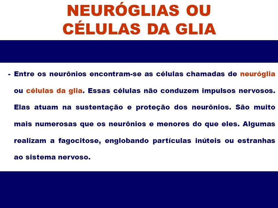 NEURÓGLIAS OU CÉLULAS DA GLIA