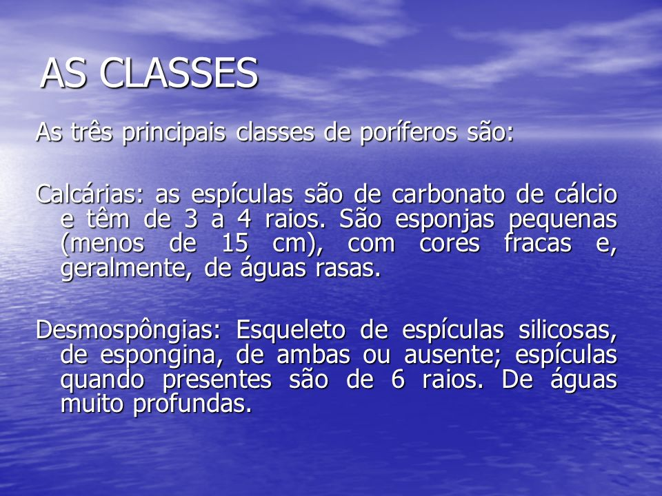 AS CLASSES As três principais classes de poríferos são: