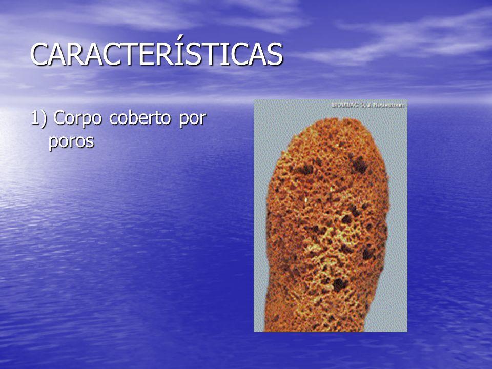 CARACTERÍSTICAS 1) Corpo coberto por poros