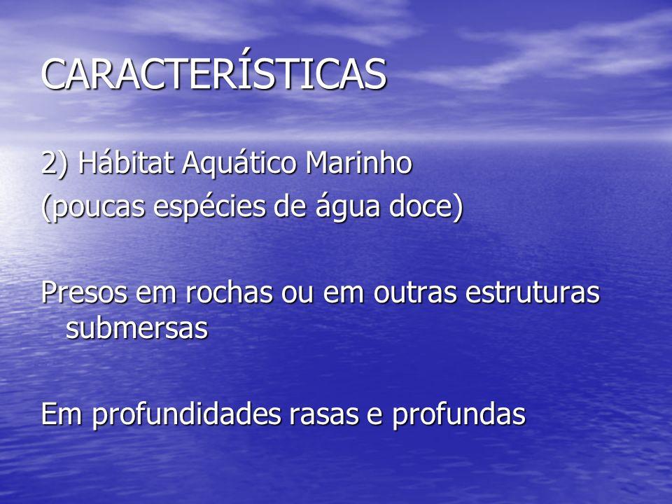 CARACTERÍSTICAS 2) Hábitat Aquático Marinho