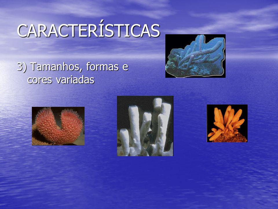 CARACTERÍSTICAS 3) Tamanhos, formas e cores variadas