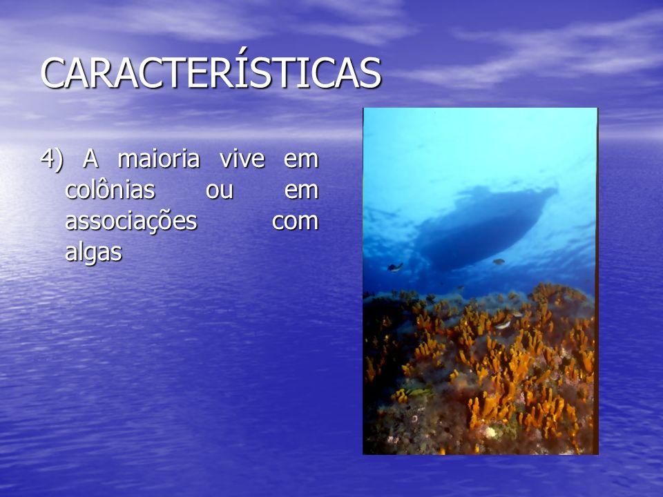 CARACTERÍSTICAS 4) A maioria vive em colônias ou em associações com algas
