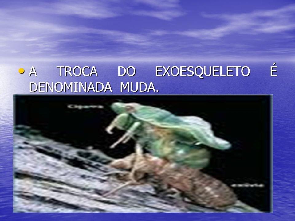 A TROCA DO EXOESQUELETO É DENOMINADA MUDA.