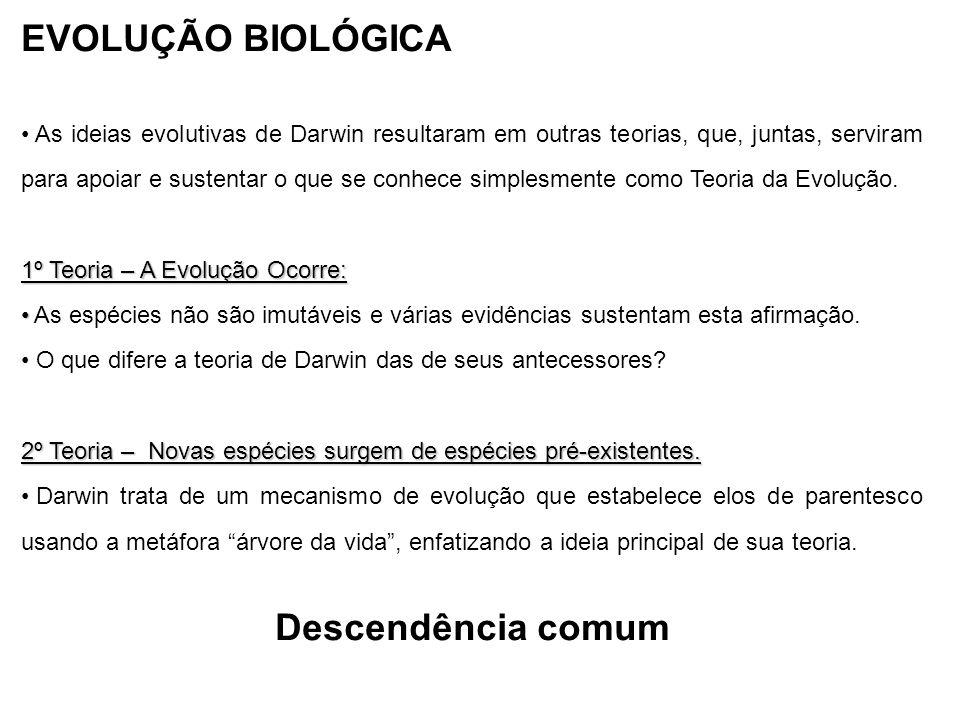 EVOLUÇÃO BIOLÓGICA Descendência comum
