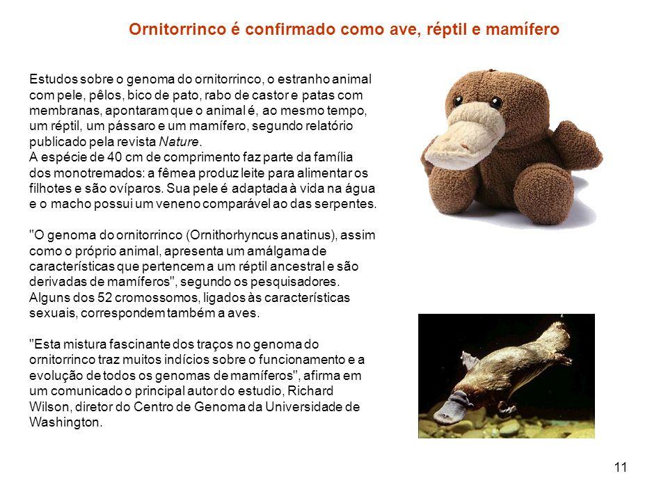 Ornitorrinco é confirmado como ave, réptil e mamífero