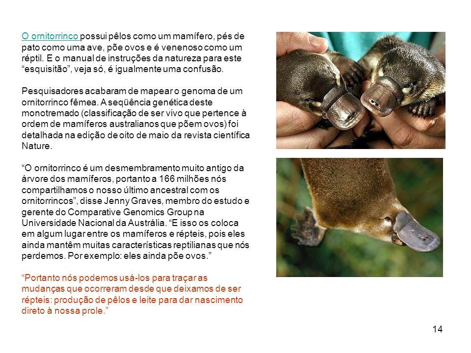 O ornitorrinco possui pêlos como um mamífero, pés de pato como uma ave, põe ovos e é venenoso como um réptil.