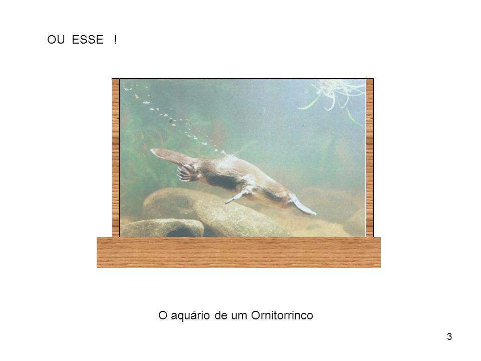 OU ESSE ! O aquário de um Ornitorrinco