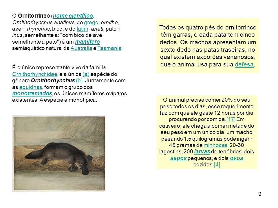 O Ornitorrinco (nome científico: Ornithorhynchus anatinus, do grego: ornitho, ave + rhynchus, bico; e do latim: anati, pato + inus, semelhante a: com bico de ave, semelhante a pato ) é um mamífero semiaquático natural da Austrália e Tasmânia.