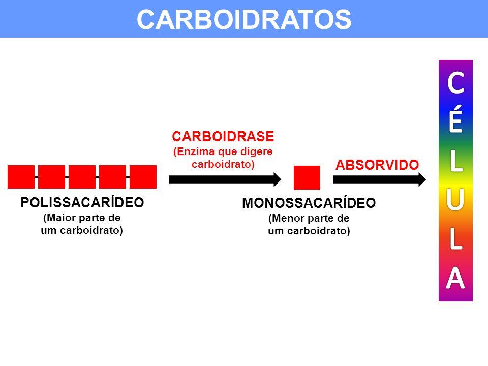 (Enzima que digere carboidrato)
