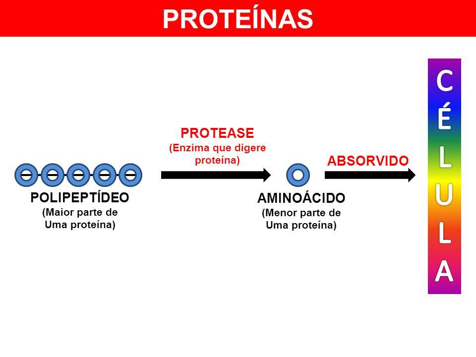 (Enzima que digere proteína)