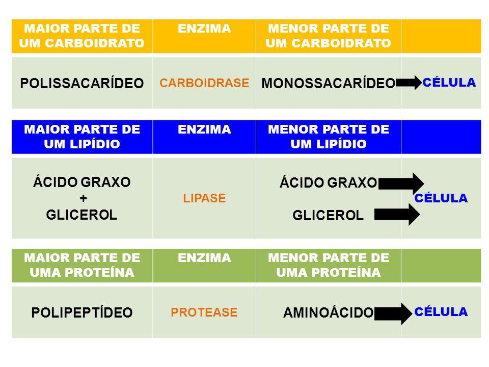 POLISSACARÍDEO MONOSSACARÍDEO ÁCIDO GRAXO + GLICEROL POLIPEPTÍDEO