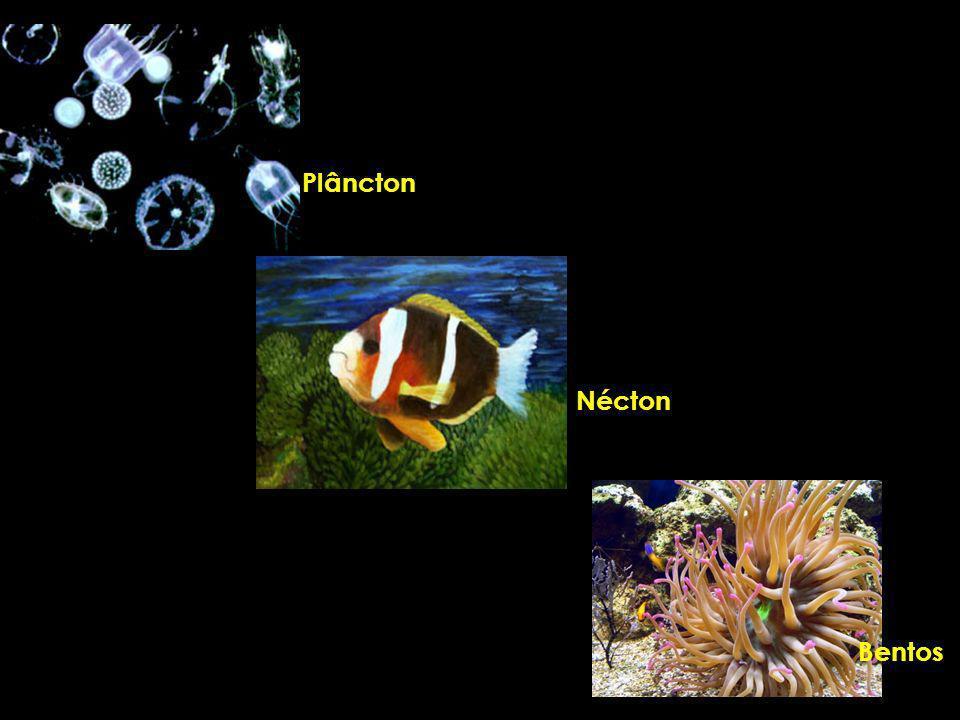 Plâncton Nécton Bentos