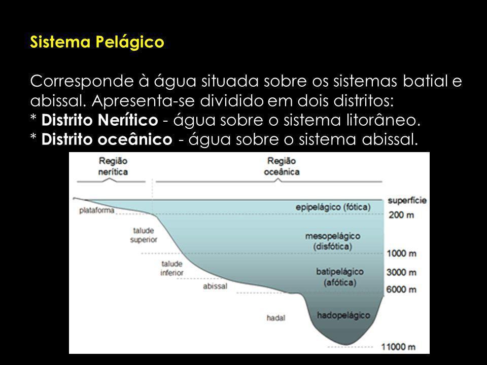 Sistema Pelágico Corresponde à água situada sobre os sistemas batial e abissal. Apresenta-se dividido em dois distritos: