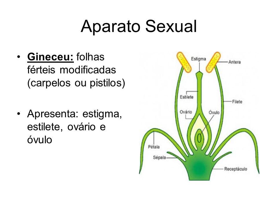 Aparato SexualGineceu: folhas férteis modificadas (carpelos ou pistilos) Apresenta: estigma, estilete, ovário e óvulo.