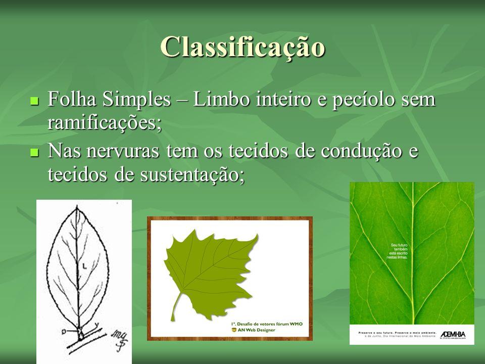 ClassificaçãoFolha Simples – Limbo inteiro e pecíolo sem ramificações; Nas nervuras tem os tecidos de condução e tecidos de sustentação;