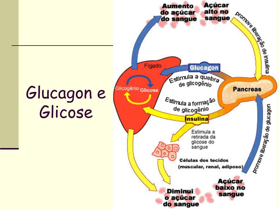 Glucagon e Glicose
