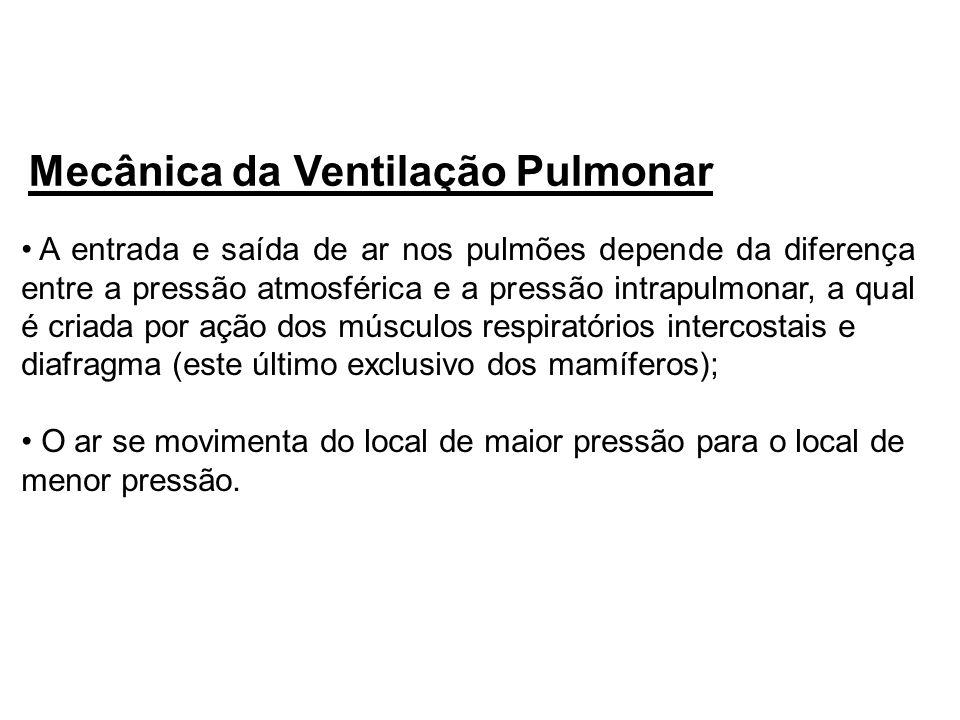 Mecânica da Ventilação Pulmonar