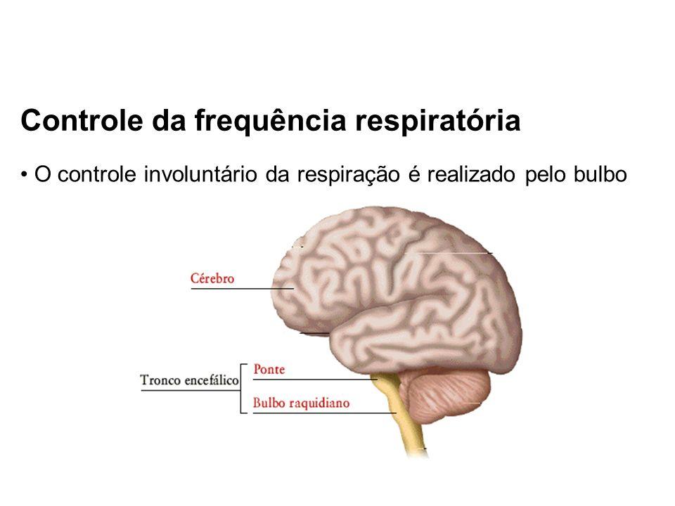 Controle da frequência respiratória