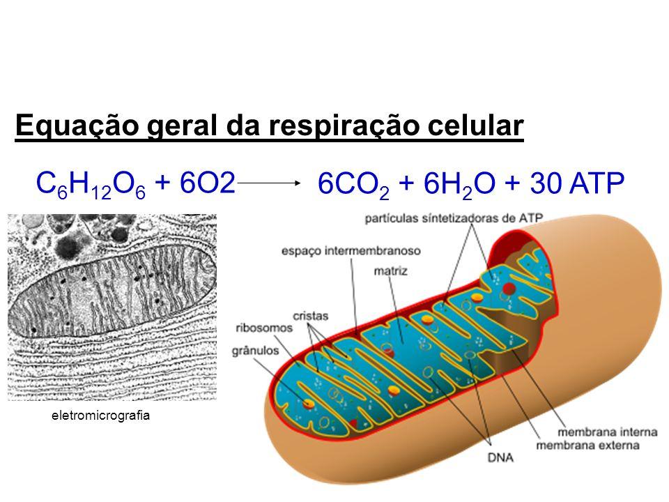 Equação geral da respiração celular