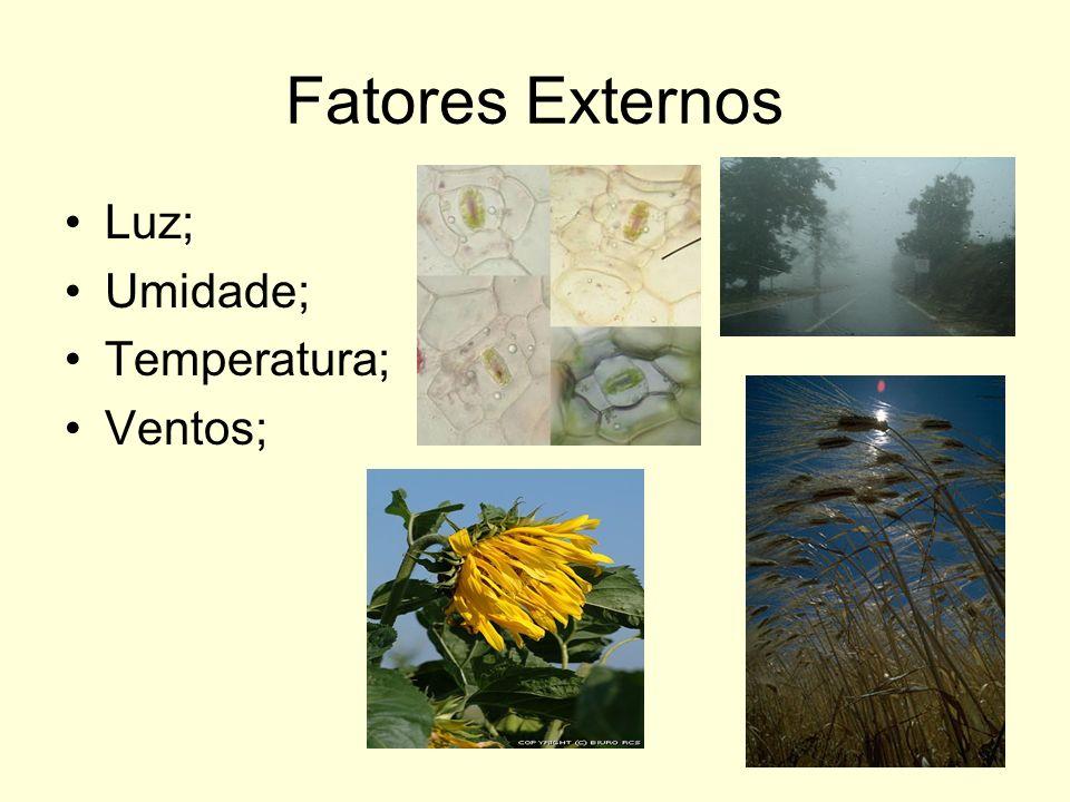 Fatores Externos Luz; Umidade; Temperatura; Ventos;