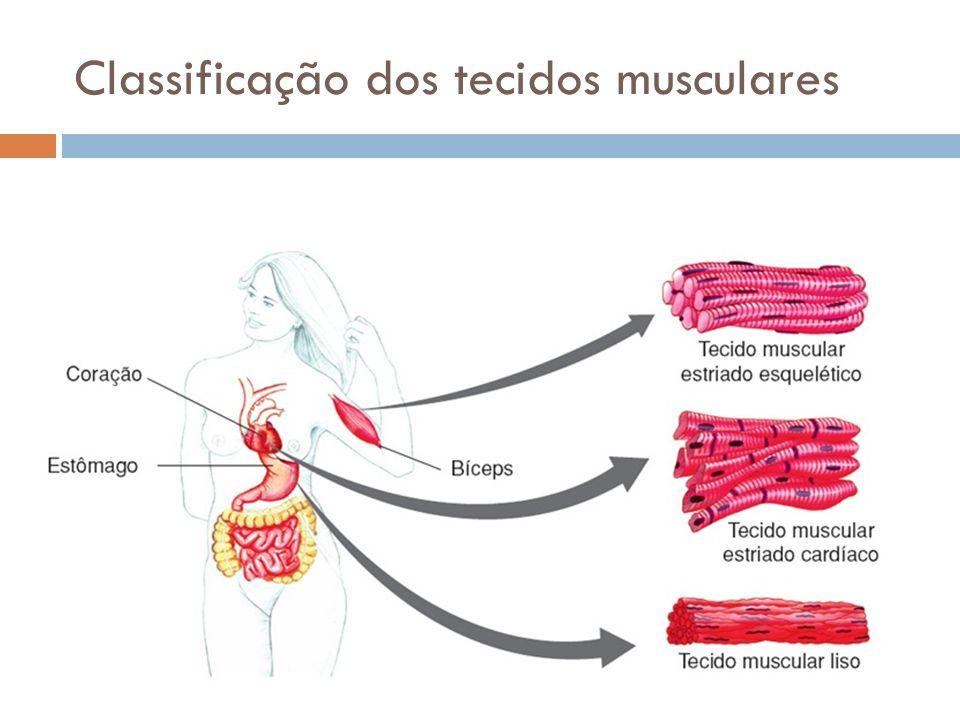 Classificação dos tecidos musculares