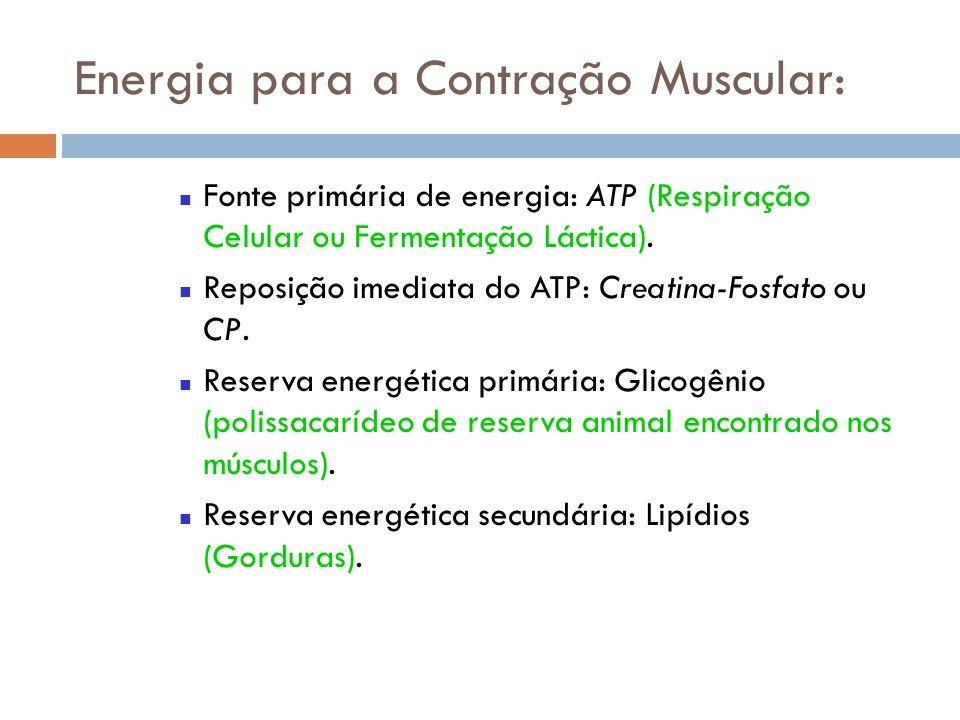 Energia para a Contração Muscular: