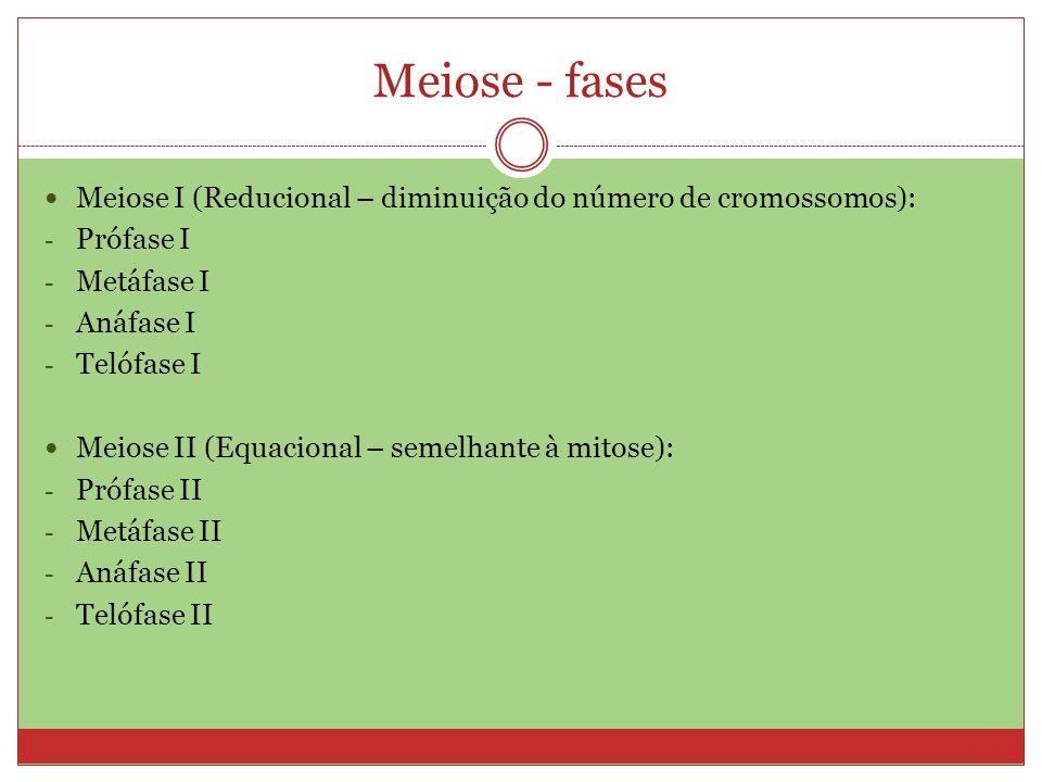 Meiose - fases Meiose I (Reducional – diminuição do número de cromossomos): Prófase I. Metáfase I.