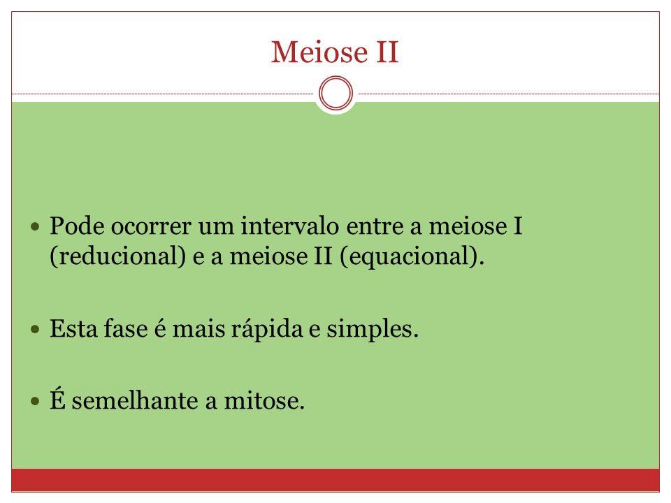 Meiose II Pode ocorrer um intervalo entre a meiose I (reducional) e a meiose II (equacional). Esta fase é mais rápida e simples.