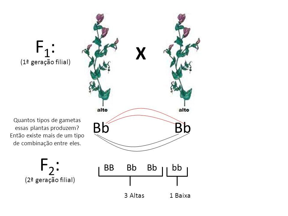 F1: X F2: Bb Bb BB Bb Bb bb (1ª geração filial) (2ª geração filial)