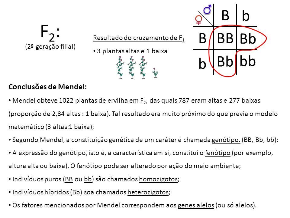 F2: B b B BB Bb Bb bb b Conclusões de Mendel: (2ª geração filial)