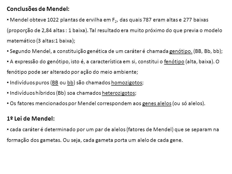 Conclusões de Mendel: 1º Lei de Mendel: